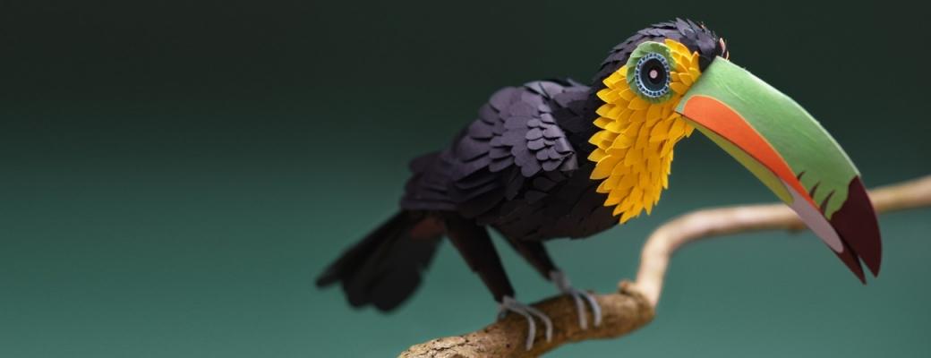 twitter banner toucan